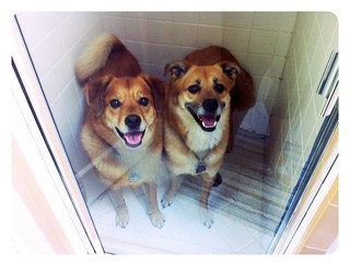 Shower dogs | by tehgipster