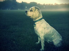 dog in fog