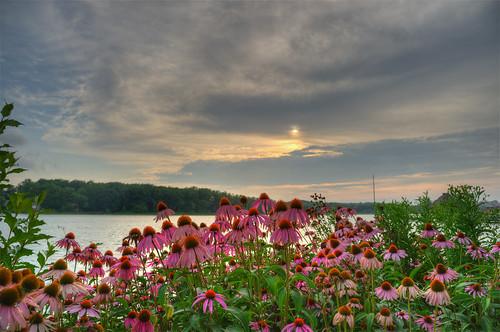 flowers sunset ohio lake geotagged pier nikon raw nef coneflowers hdr silouhette nx2 d3s starkcountyohio sippolakepark nikongp1 photomatixpro4 nikkor24120f4