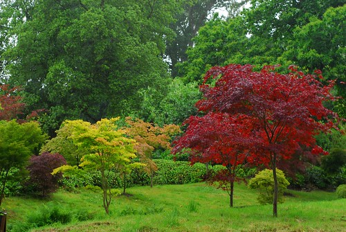 Japanese Tea Garden, Kingston Lacy   by Forest Pines