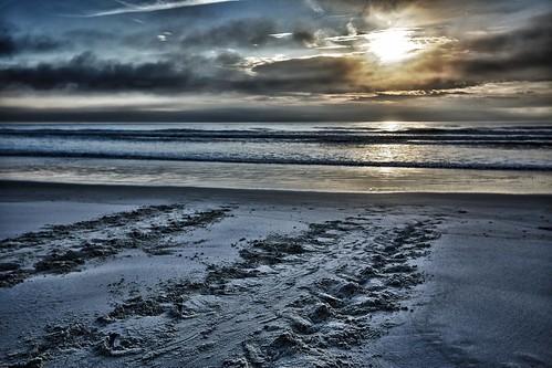 usa beach canon florida turtle fl atlanticocean hdr flaglerrivertoseapreserve loggerheadtracks