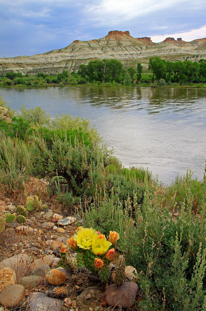 cactus and  river   7-4-11 009.jpg