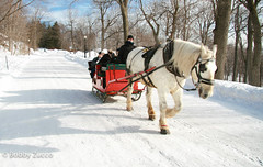 Snow Ride mount royal