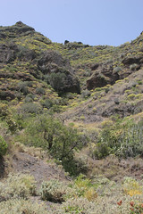 Anaga Mountains, Tenerife_2008_04_28 001.jpg
