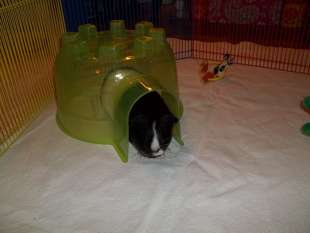 Meadow In Her New Igloo