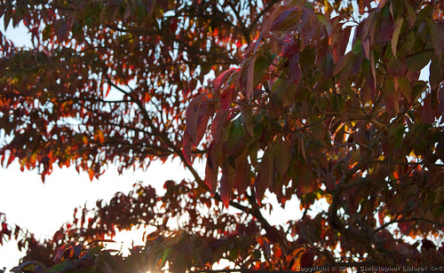 fall redleaves grahamnc nikond700 alamancecourthouse