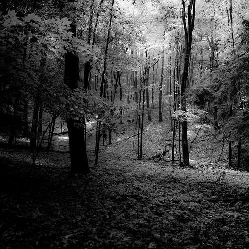 trees light shadow blackandwhite bw sunlight monochrome leaves forest dark square blackwhite woods nikon darkness branches dunes treetrunk dreamy dreamlike saugatuck d5000 noahbw