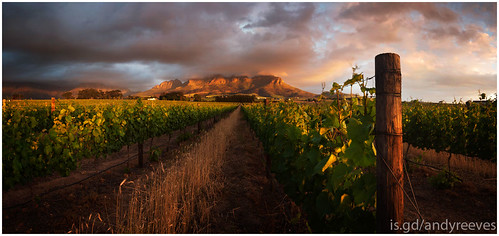 sunset panorama plants green clouds southafrica nikon sigma vineyards stellenbosch 1224 helderberg somersetwest d700