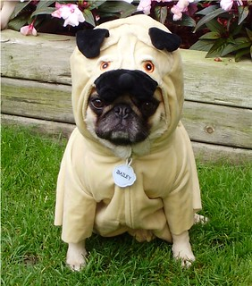 Pug In A Pug Costume 'Pugception' -Explored | by DaPuglet