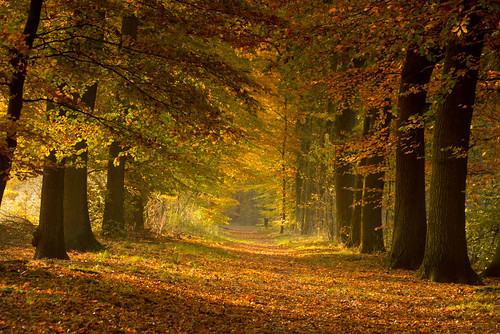 autumn forrest path herfst ommen laer hetlaer lanfgoedhetlaer