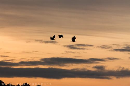 nature sunrise canon landscape wings flight baldeagles jordanlake juveniles 450d imaginefotocom