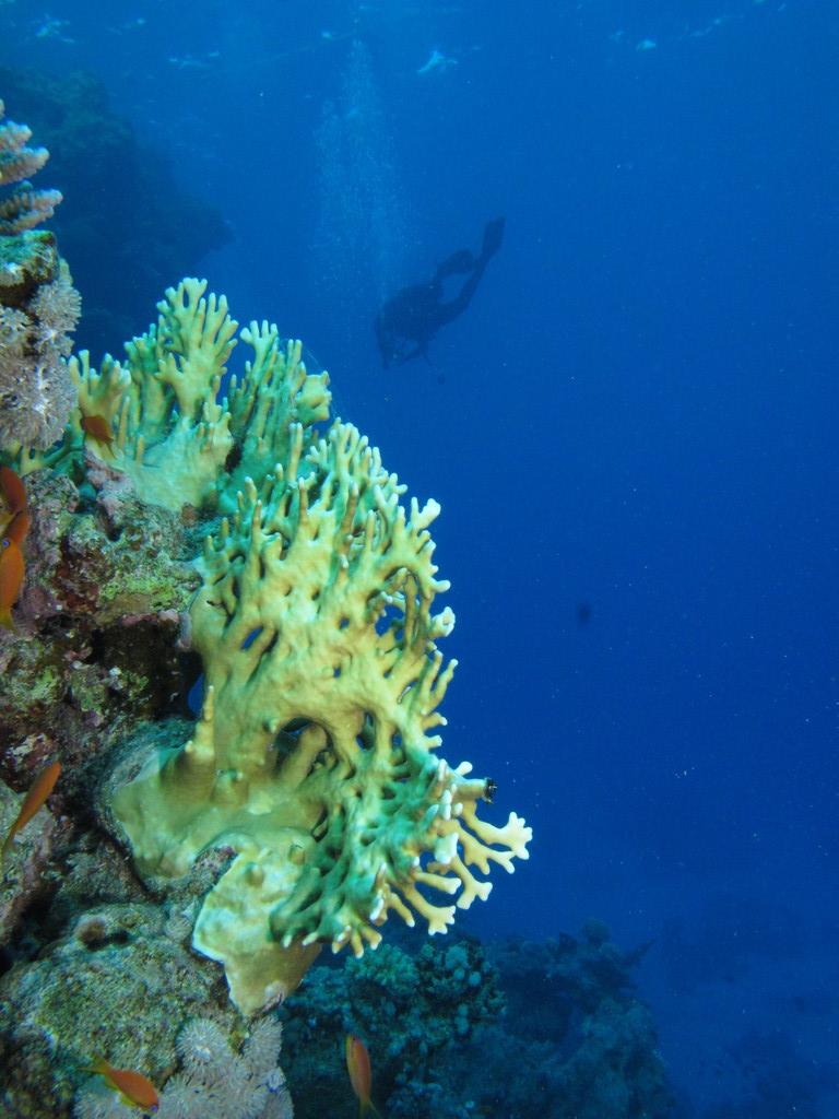 Diving (2) At Shaab Marsa Alam, Red Sea, Egypt #SCUBA