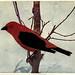 Birds of Buzzard's Roost