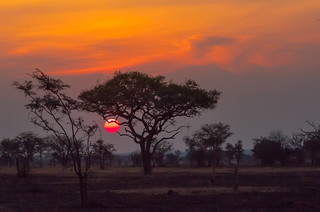 Serengeti Sunset | by puliarf