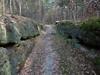 V lese nedaleko starého Berštejna, foto: Petr Nejedlý