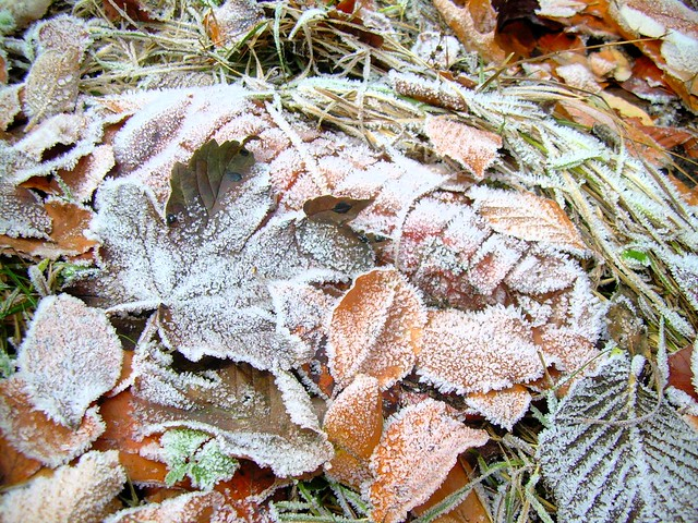 Frosty leaves by bryandkeith on flickr