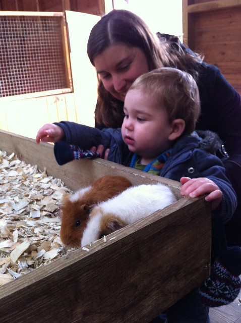 Meeting some guinea pigs at Godstone Farm