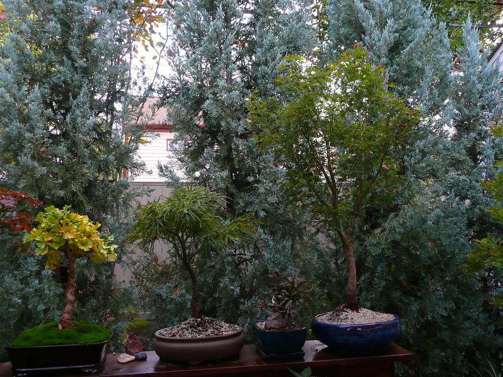 Ginkgo Biloba Mariken Acer Palmatum Villa Taranto Flickr