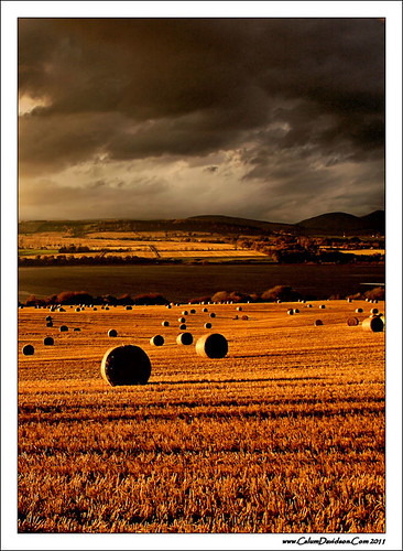 autumn light sun scotland highlands farm farming bales blackisle culbokie