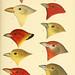 A history of North American birds. v.1.