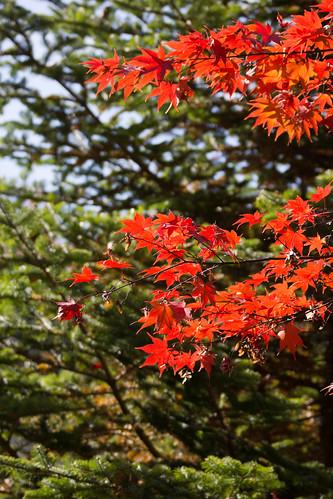 DSC_A77_00306 | by jorge.kashima
