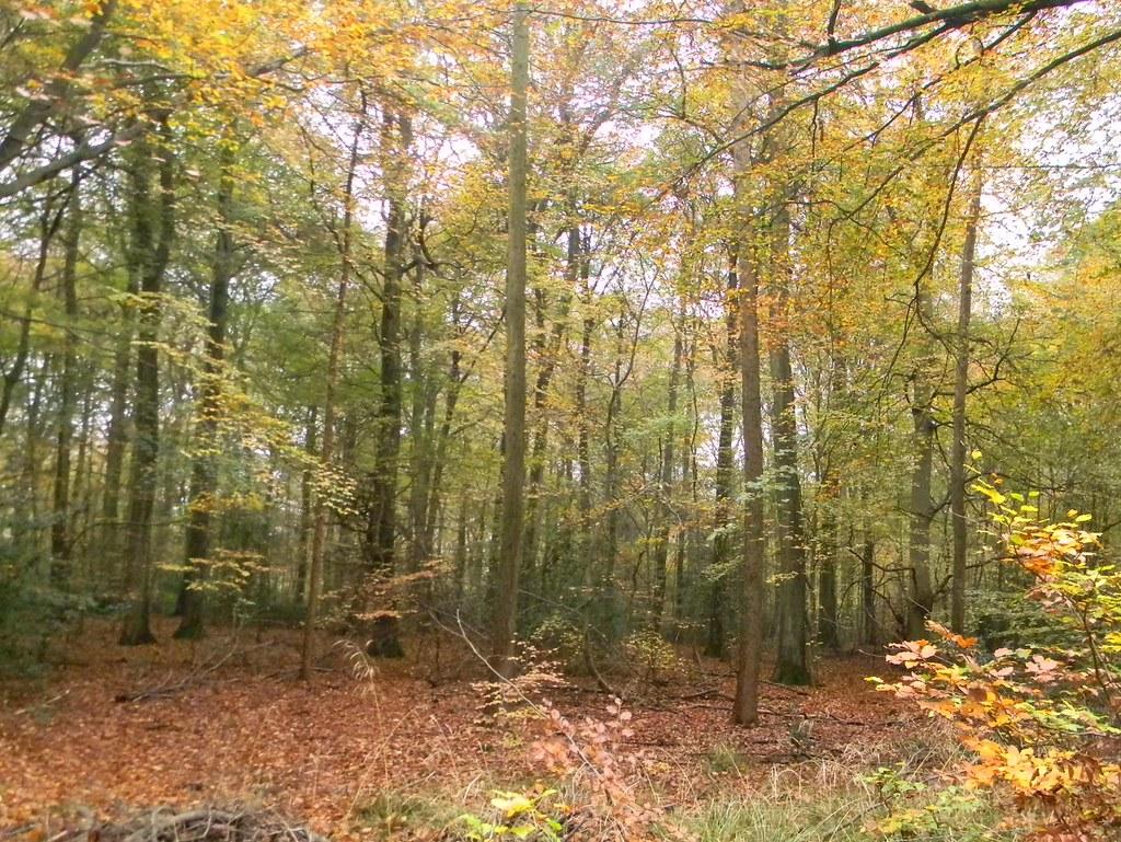 Autumn Colours 10 Princes Risborough to Great Missenden