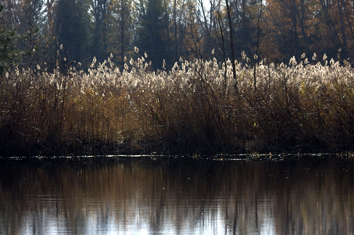 november autumn reflection green fall water grass wisconsin bay grasses waterfowl preserve suamico barkhausen