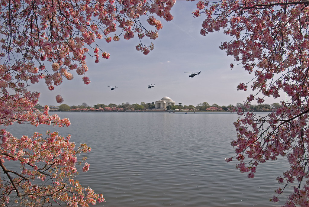 36ccdc9b732 ... Helicopters over the Tidal Basin -- Washington (DC) Friday Afternoon March  23