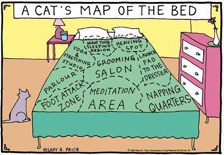 cat map of the bed