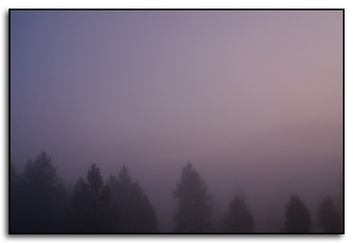 trees colors fog sunrise washington spokane