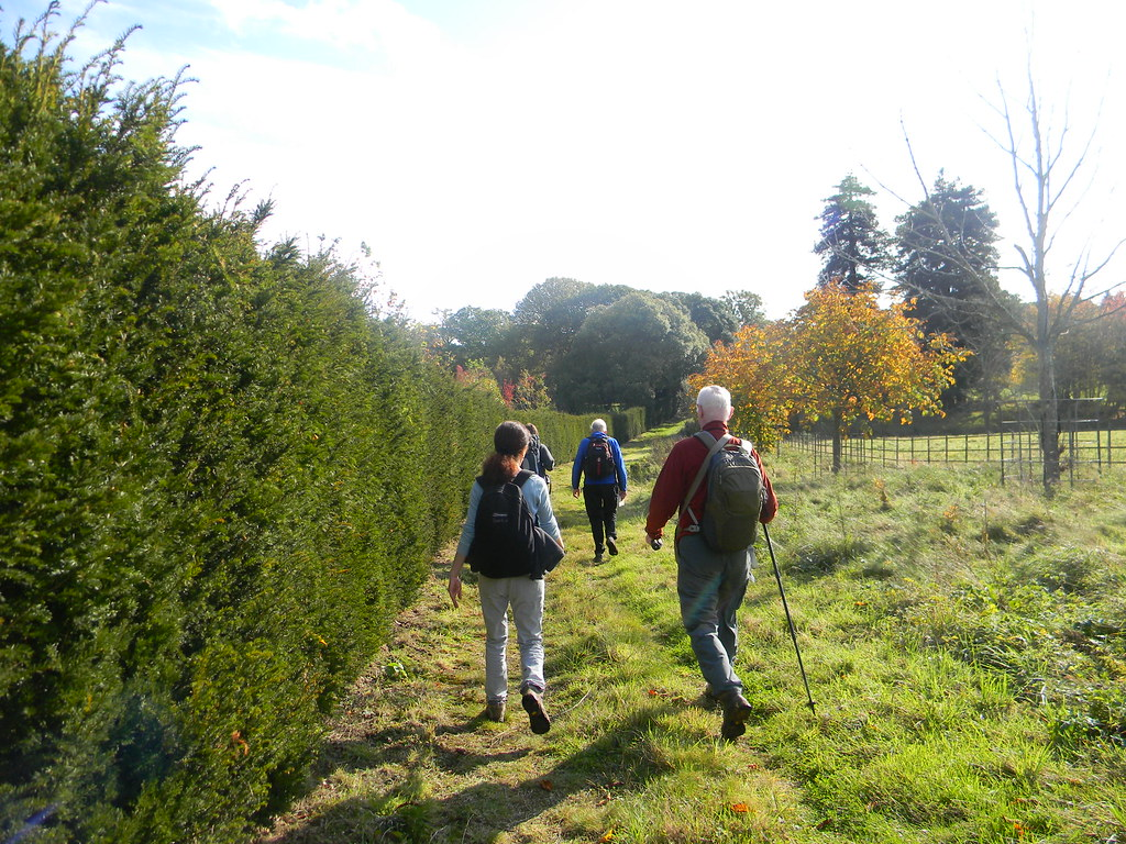 Along a hedge Witley to Haslemere