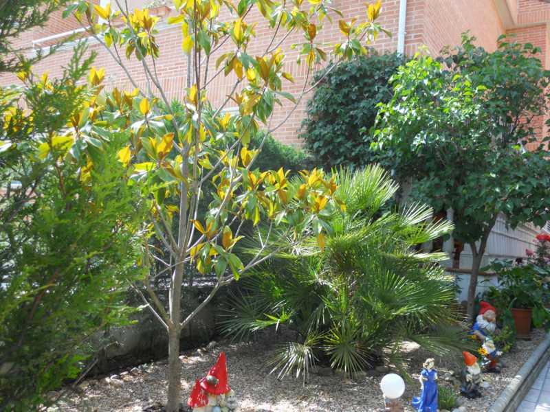 Árboles en el jardín de los enanitos