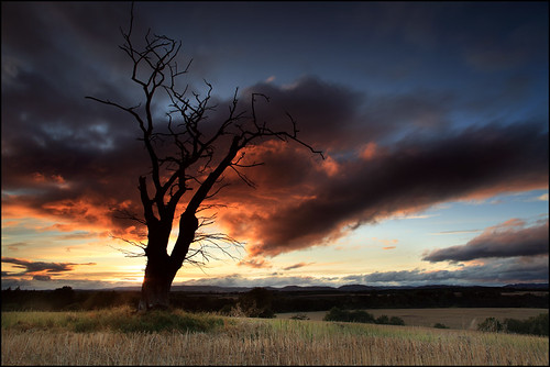 new old uk light sunset shadow red cloud dog storm tree field wall forest canon fence dark hope evening coast scotland europe time angus farm under over perthshire scottish glen tay filter cover bark lee nd law finn mound fleeting dri clyne clump colorphotoaward saariysqualitypictures