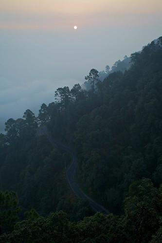 india tree pine weekend delhi hill uttaranchal hillstation lansdowne garhwal canon1740f4l partha uttarakhand pauri chowdhury lensdowne canotonment parthachowdhuryphotography