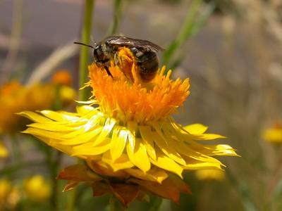 Seeding Nodes. Reintroducing Wildflowers to Mt Majura