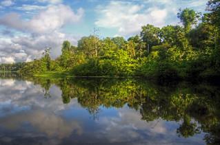 amazon river reflectons | by mariusz kluzniak