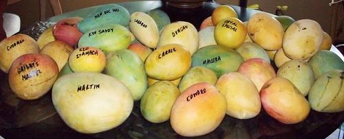 TREC Mangoes 016