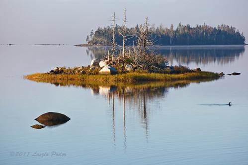 canada bird water rock island coast novascotia shoreline coastal getty atlanticocean loon maritimes musquodoboitharbour gettyimagescanada