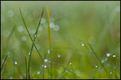 canada green grass rain bc bokeh britishcolumbia lawn burnaby raindrops zd 50mmmacro20 50mmmacrof20 olympuse3 deerlakeavenue