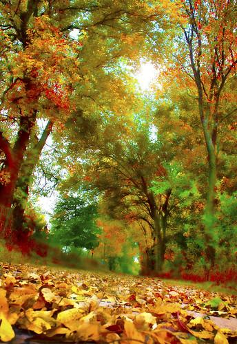 autumn color fall canon pov pathway fallenleaves canoneosdigitalrebelxsi jackaloha2 photoshopcs5 artistoftheyearlevel2