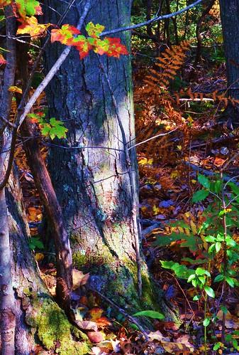 cromwellhighschool cromwell autumn johnjmurphyiii connecticut newengland october usa 06416 foliage