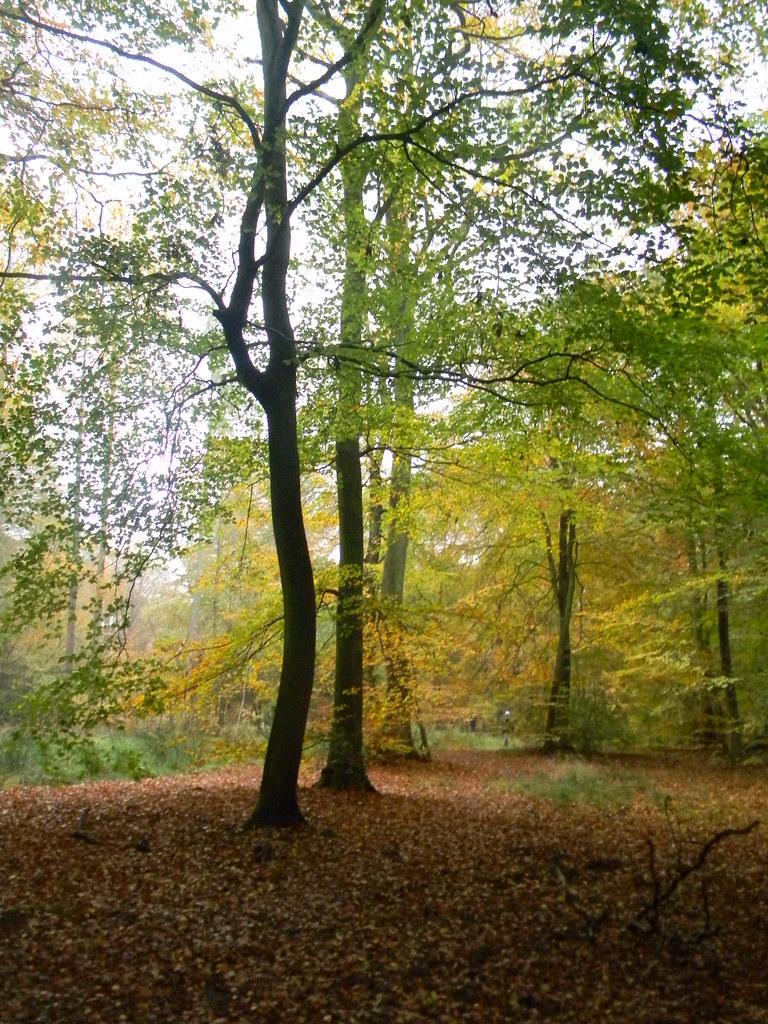 Autumn Colours 3 Princes Risborough to Great Missenden Monkton Wood