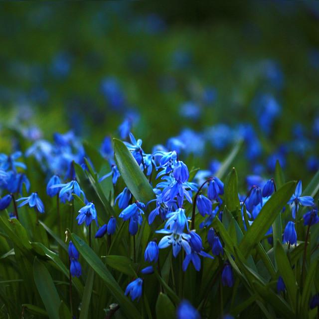 feeling spring (explored)