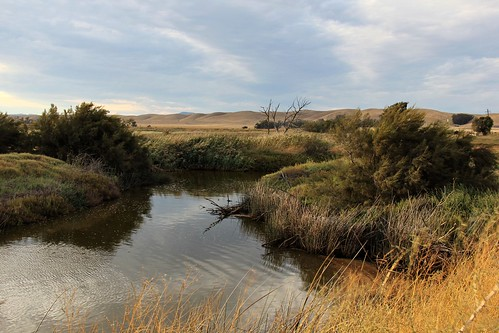 northerncalifornia evening wetlands solanocounty suisunmarsh grizzlyislandroad