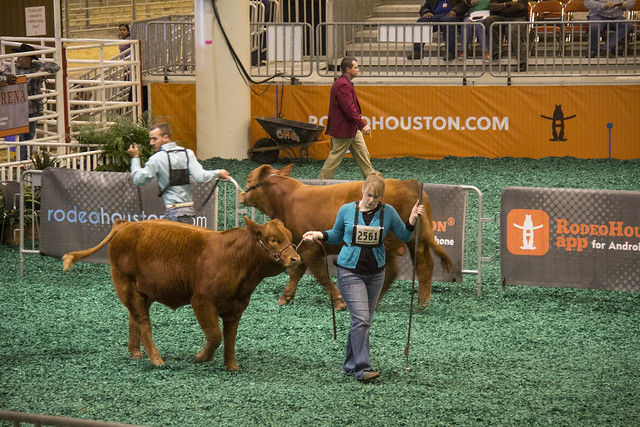 Houston Rodeo_25