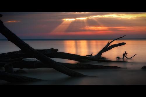 longexposure morning trees light color beach water sunrise dawn bay decay maryland rays chesapeake chesapeakebay