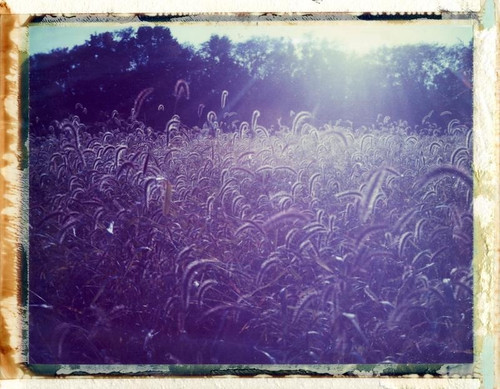 sunset ohio field analog polaroid instant expired 440 108 packfilm metropark prairieoaks