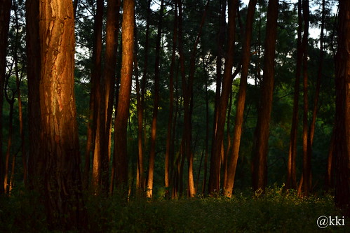 sunset evening highlander hamirpur best4gpin