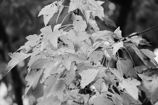 Autumn 2011 | by dolceluxury