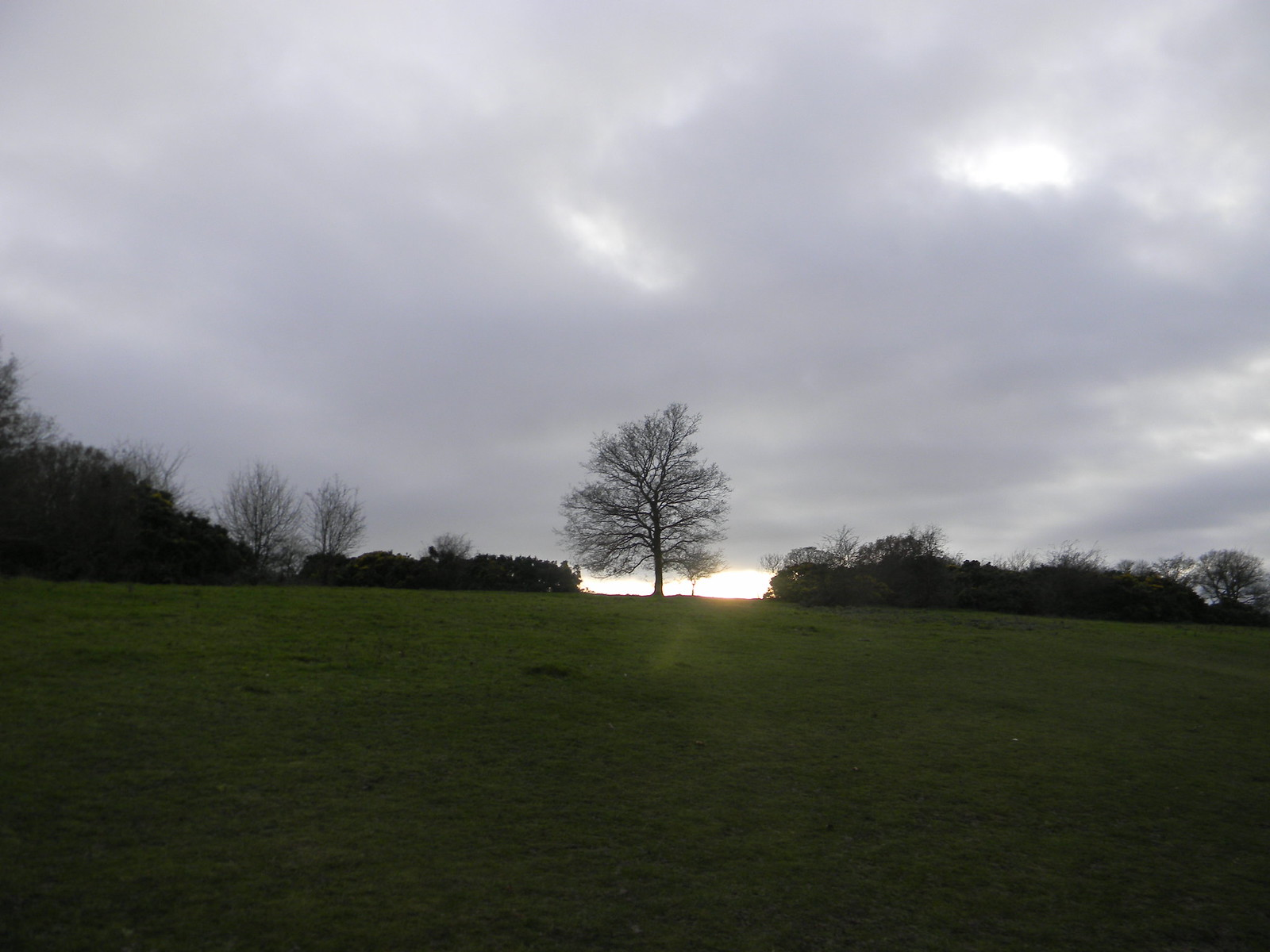 Tree in a gap Princes Risborough to Wendover